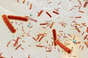 Descubren cómo se adhieren algunas bacterias a los dispositivos médicos de plástico